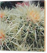 Spiny Barrel Cactus Wood Print