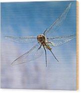 Spiny Baskettail Epitheca Spinigera Wood Print