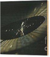 Spiny Orb Weaver Wood Print