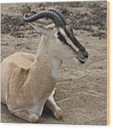 Spiral Horned Antelope Wood Print