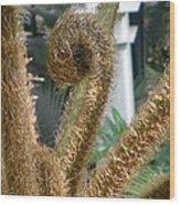 Spiral Plant Wood Print