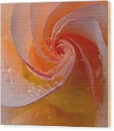 Spiral Rose Wood Print by Juergen Roth