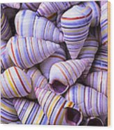 Spiral Sea Shells Wood Print