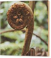 Spiral Tree Fern Wood Print