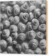 Spirals Black And White Wood Print by Priska Wettstein