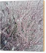 Spirea In Ice Wood Print