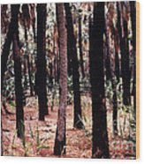 Spirit In The Trees Wood Print by Steven Valkenberg