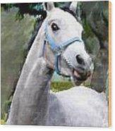 Spirited Grey Horse Wood Print