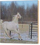 Spirited Horse Wood Print
