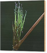 Spiritualism In Nature... Wood Print
