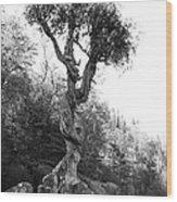 Spirt Tree Wood Print