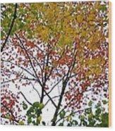 Splash Of Autumn Colors Wood Print