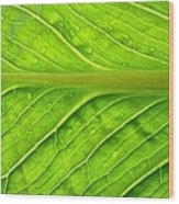 Splash Of Green Wood Print by Tom Druin