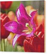 Splash Of Purple Wood Print