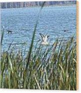 Splashing In The Lake Wood Print