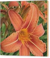 Splendid Day Lily Wood Print