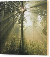 Splendour Wood Print