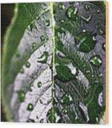 Split Leaf Wood Print