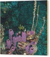 Sponge Condo Wood Print