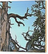 Spooky Bristlecone Pine At Spectra Point On Ramparts Trail In Cedar Breaks National Monument-utah  Wood Print