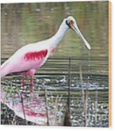 Spoonbill In The Pond Wood Print