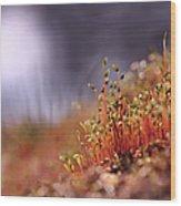 Sporophyte Colony Wood Print