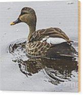 Spot-billed Duck  Wood Print
