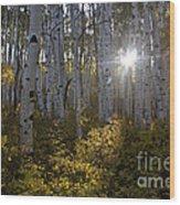 Spot Of Sun Wood Print by Jeff Kolker