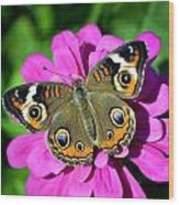 Spotted Butterfly On Pink Flower Wood Print