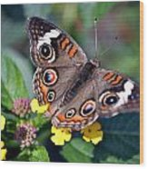 Spotted Butterfly Wood Print