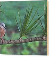 Spotted Dove Wood Print
