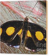 Spotted Grecian Shoemaker Butterfly Wood Print