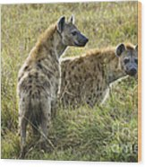 Spotted Hyaena Wood Print