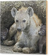 Spotted Hyena Mother And Pups Wood Print