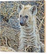 Spotted Hyena Pup In Kruger National Park-south Africa  Wood Print