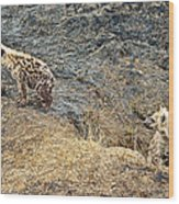 Spotted Hyena Pups In Kruger National Park-south Africa Wood Print