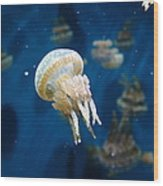 Spotted Jelly Fish 5d24950 Wood Print by Wingsdomain Art and Photography