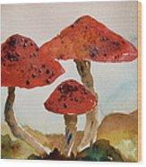 Spotted Mushrooms Wood Print