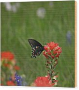 Spotted On Wildflower Wood Print