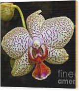 Spotted Orchid Wood Print