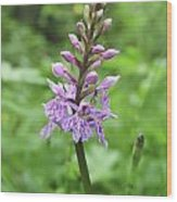 Spotted-orchids Wood Print