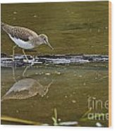 Spotted Sandpiper Pictures 61 Wood Print