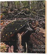 Spotted Turtle Wood Print
