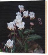 Spotted Wintergreen 5 Wood Print