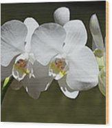 Spray Of Beautiful White Orchids Wood Print