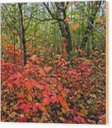 Spray Of Scarlet Wood Print