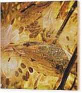 Spray Of Sienna Wood Print
