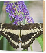 Spread Your Wings My Little Butterfly  Wood Print