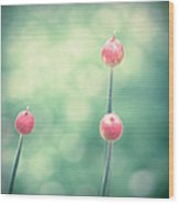 Spring Allium Buds Wood Print