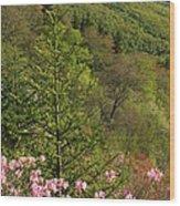 Spring Along The Blue Ridge Wood Print